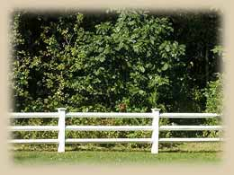 post & rail - vinyl fence